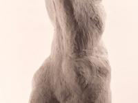weiblicher-torso-rueckenansicht
